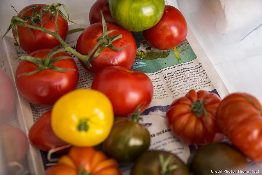 papier journal tomate